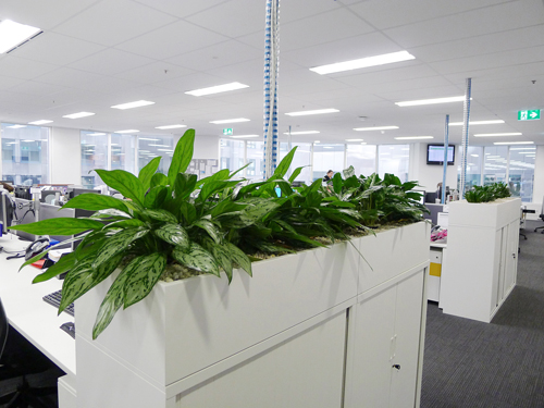 office planter boxes. office planter boxes u