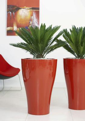 Rent Plants Planters Plant Pots In Sydney