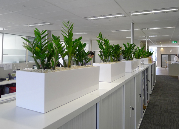 office planter boxes. office planter boxes zanzibar in small box i