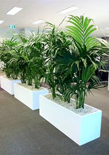 Sydney Indoor Plant Hire & Maintenance: Rent Plants Sydney