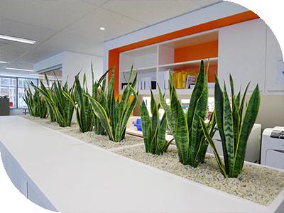 Green Building Council Of Australia GBCA Sydney Plant