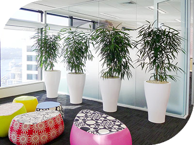 Plants For Rent Sydney Reception Areas Office Partitions